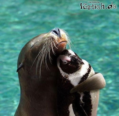 Seehund und Pinguin knuddeln