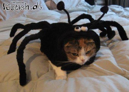 Spinne frisst Katze