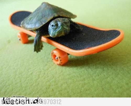 Skater Schildkröte