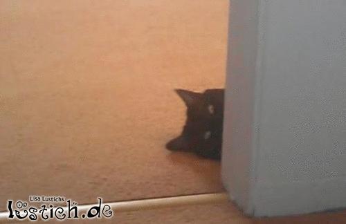 Hab ich gerade Fisch gehört?