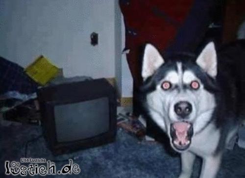 Dein Wachhund
