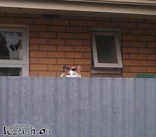 Nachbarskatze