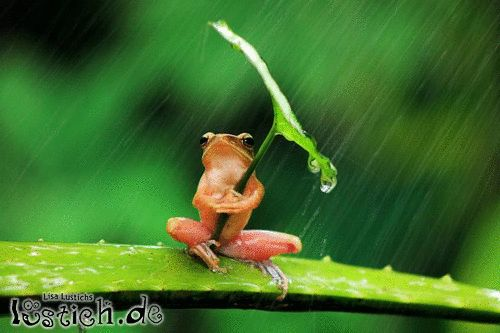 Regen nervt