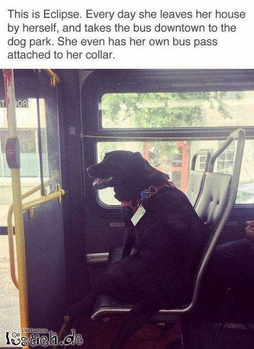 Hund nimmt täglich den Bus zum Hundepark