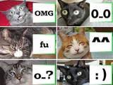 Katzen-Smileys