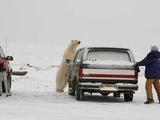 Eisbär gegen Mensch