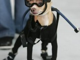 Hund-Tauchausrüstung