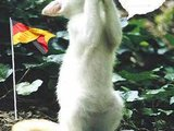 Katze ist für deutscland