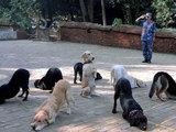 Stillgestanden ihr Hunde
