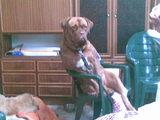 Hund im Stuhl
