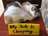 Mein Job ist Schlafen