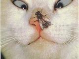 Katze sieht Fliege