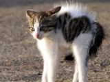Herzallerliebste Katze