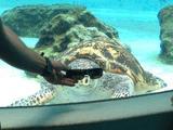 Coole Schildkröte