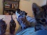 Angriff der Katzen