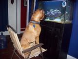 Fernsehsendung für Hunde