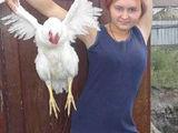 Sexy Hühnchen