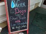 Wasser für Hunde