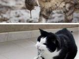 Mäusejagd im Laufe der Zeit