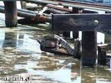 Krokodil und Schildkröte