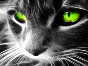 greenshadow